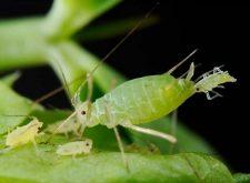 Народные средства от тараканов: простые и эффективные методы