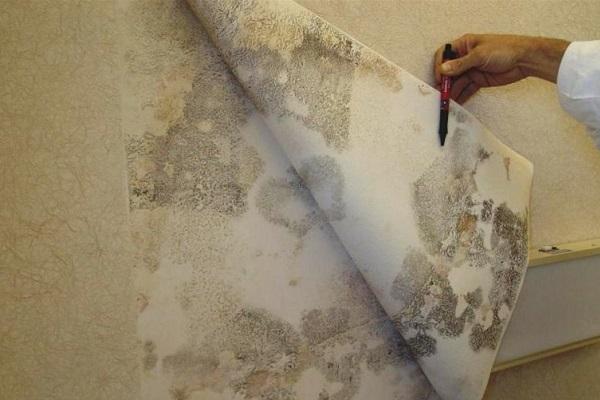 Как уничтожить плесень на стенах под обоями