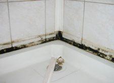 Плесень в ванной — все средства для уничтожения
