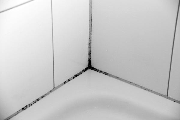 причины появления плесени в ванной