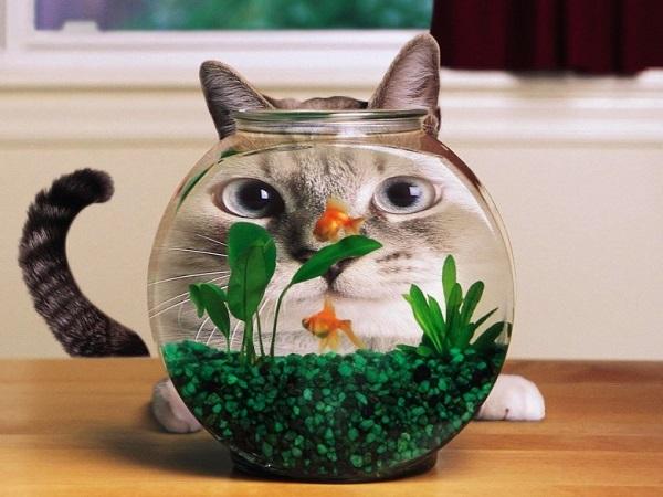 плесень +в аквариуме что делать