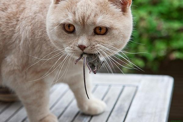 Мыши в доме - методы избавления