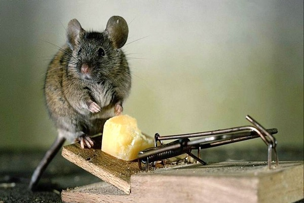 Средства от мышей в доме