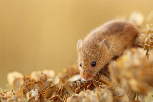 какие средства от мышей лучше