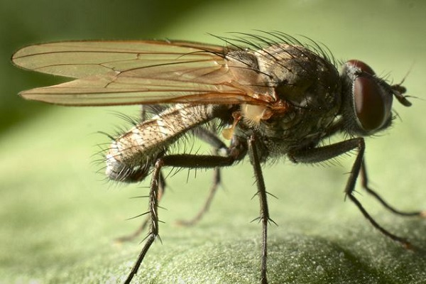 Вредители огурцов: виды и методы борьбы